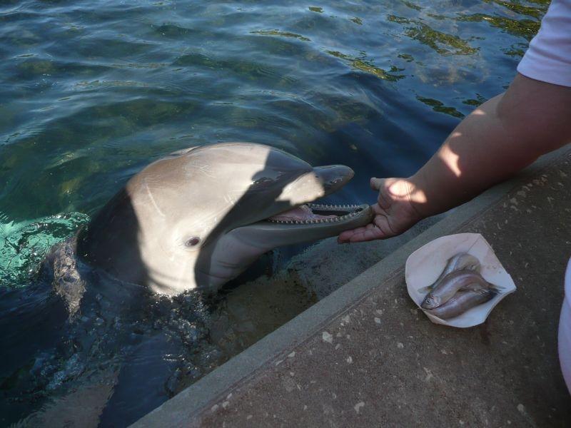 Delphine füttern