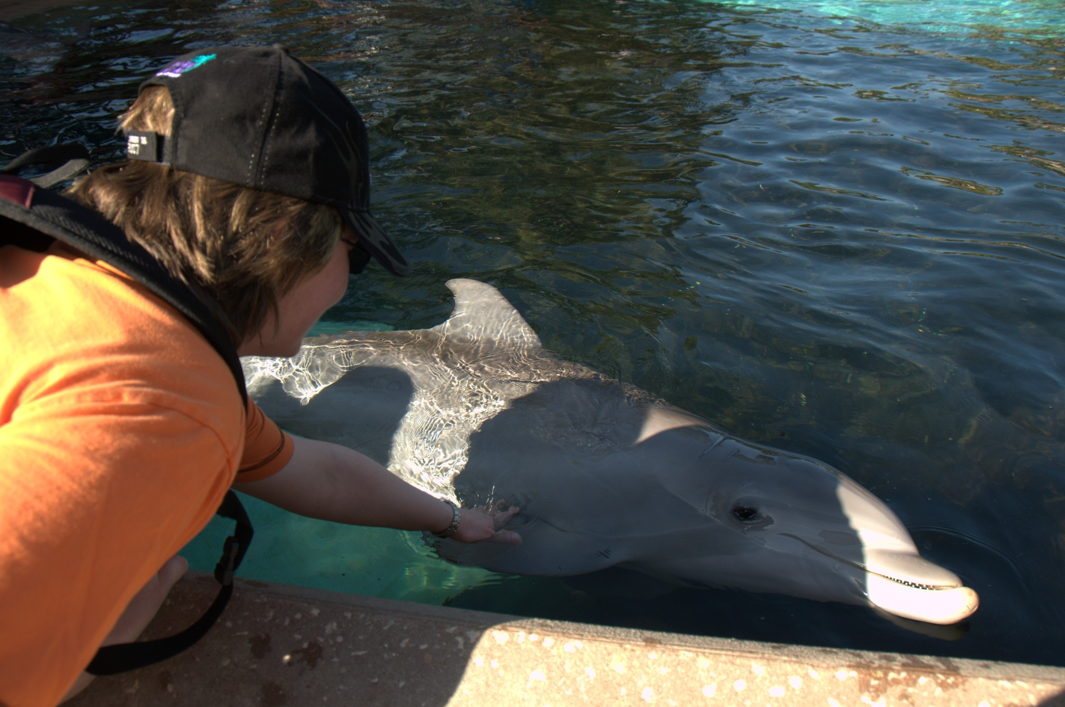 Delphin in SeaWorld