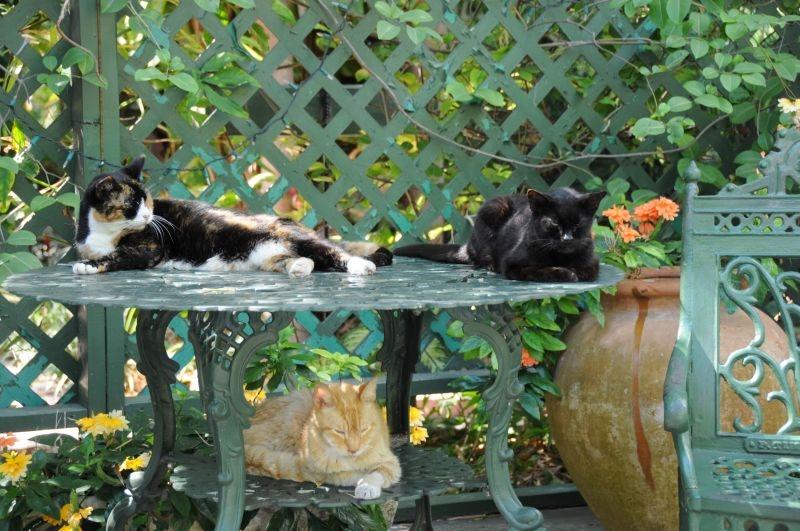 Hemingway Haus Katzen
