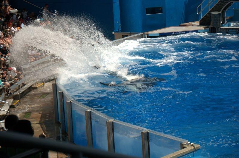 Nass werden im SeaWorld