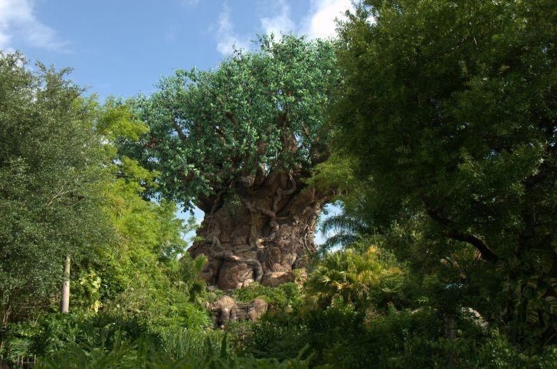Animal Kingdom - nein, der Baum ist nicht echt