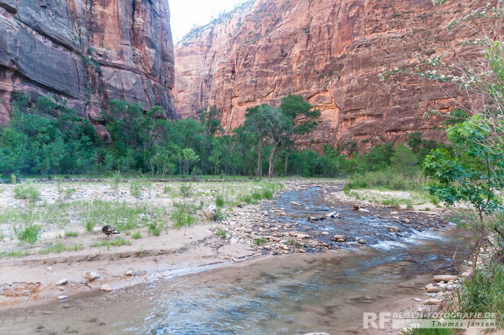 Virgin River im Zion NP