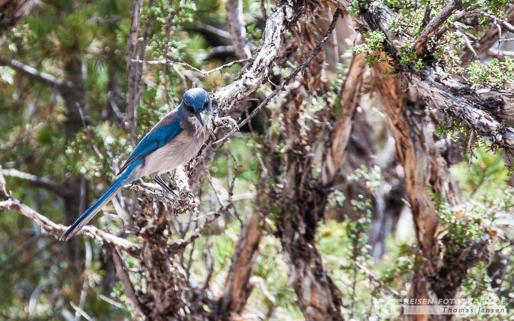 Hübscher Vogel am Grand Canyon