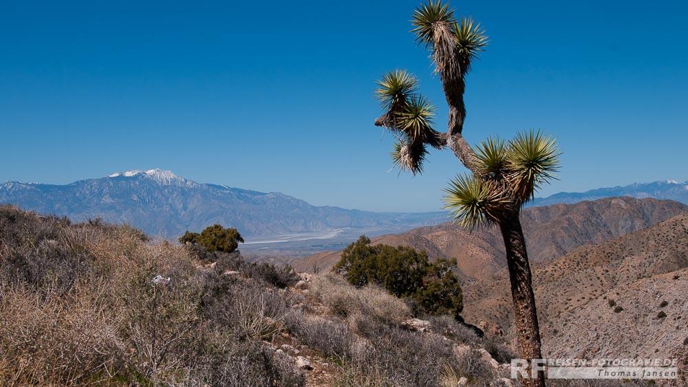 Blick auf Palm Springs im Süden