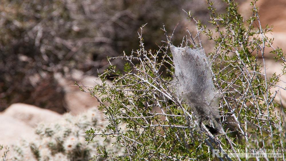 Spinnennetz und -nest