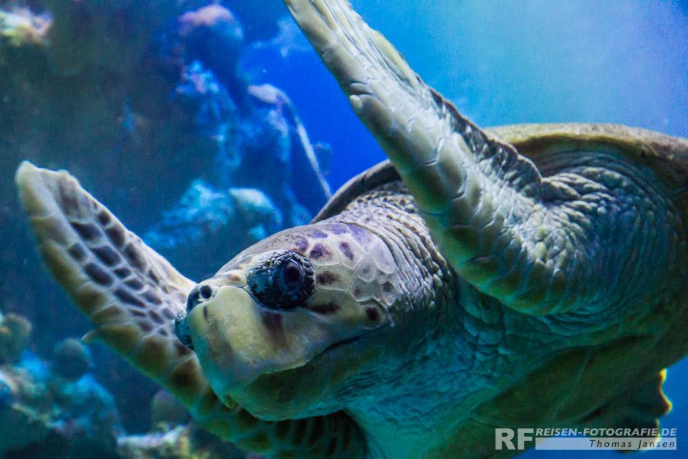 Die nächste Schildkröte