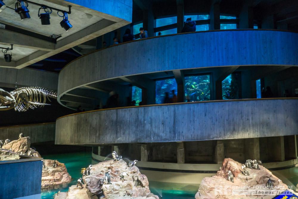 Im Aquarium von Boston