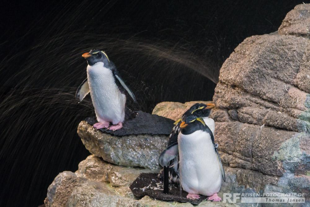 Pinguin Dusche