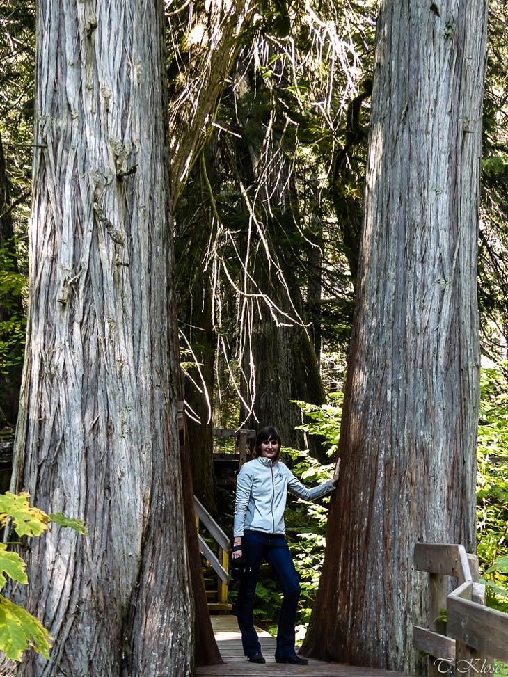 Auf dem Giant Cedars Trail in Revelstoke Nationalpark, British Columbia