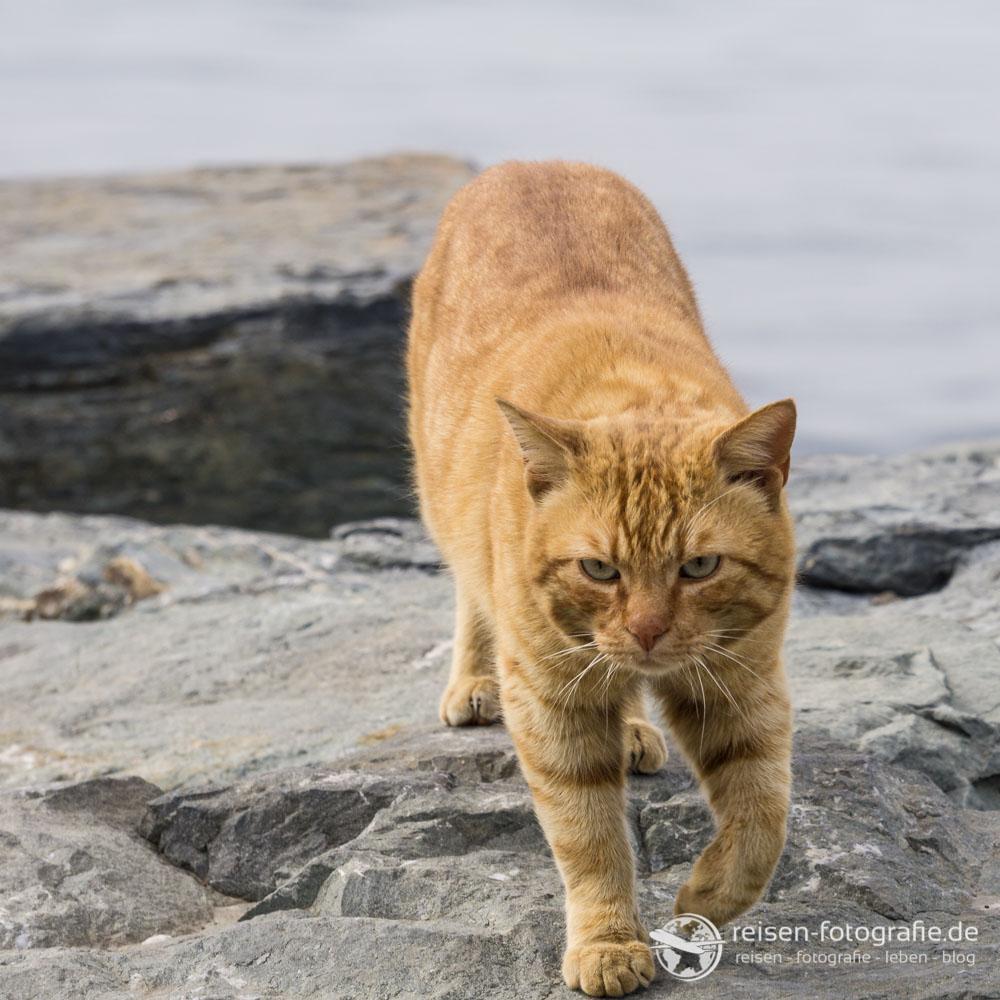 Katze an der Promenade
