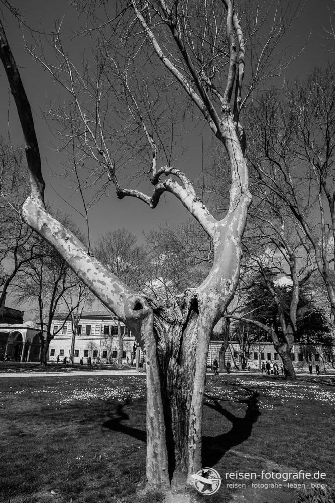 Was kann der Baum erzählen?