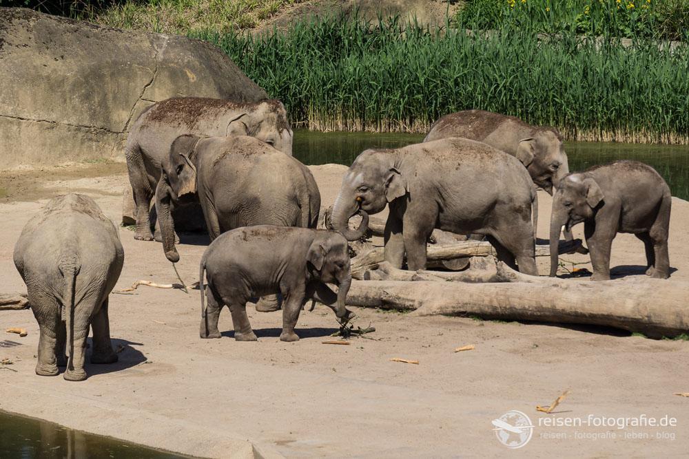 Elefantengehege im Kölner Zoo
