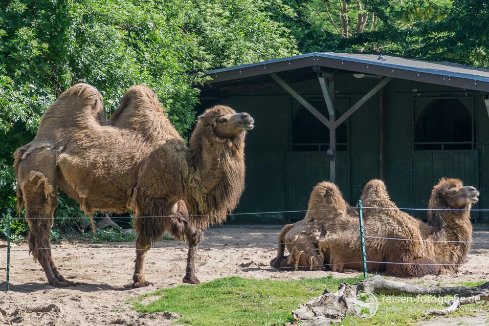ein tag im k lner zoo einem tollen zoo im herzen von k ln. Black Bedroom Furniture Sets. Home Design Ideas
