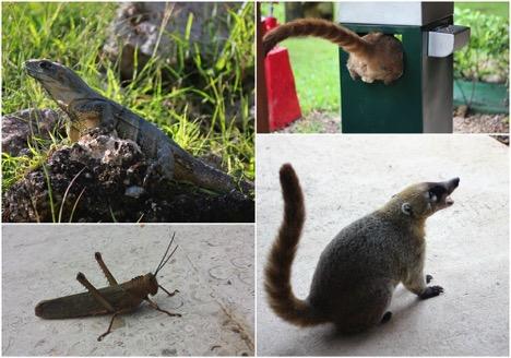 Auch tierisches kann man ganz nah erleben.