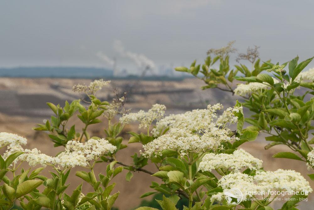 Blumen am Tagebau
