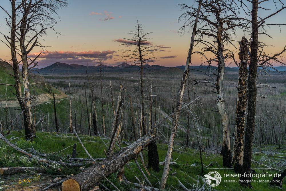 Tolle Fotomotive liefern die verbrannten Wälder