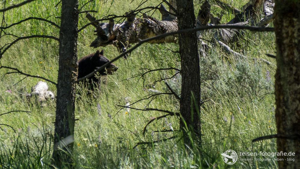 Da im Wald - ein Bär