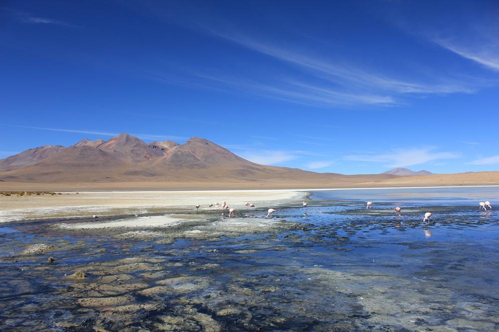 Eine der zahlreichen und farbenprächtigen Lagunen in der Salar de Uyuni.