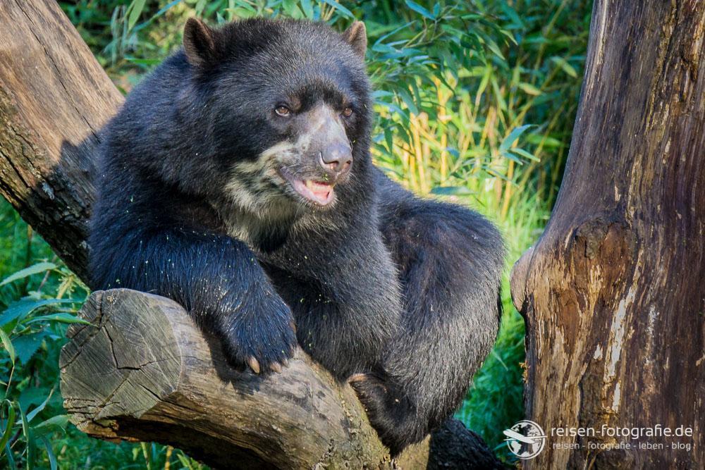 Genervte Bärenmama