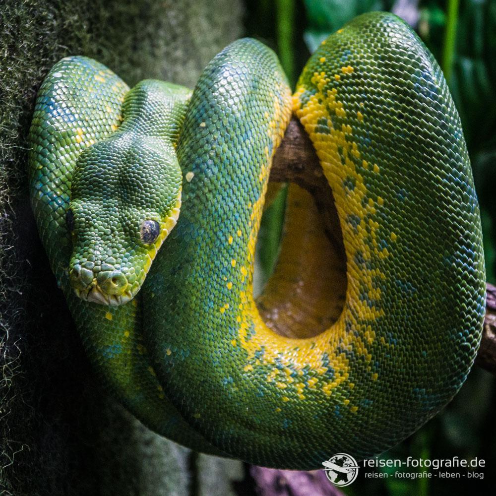 Schlangen sind einfacher zu fotografieren