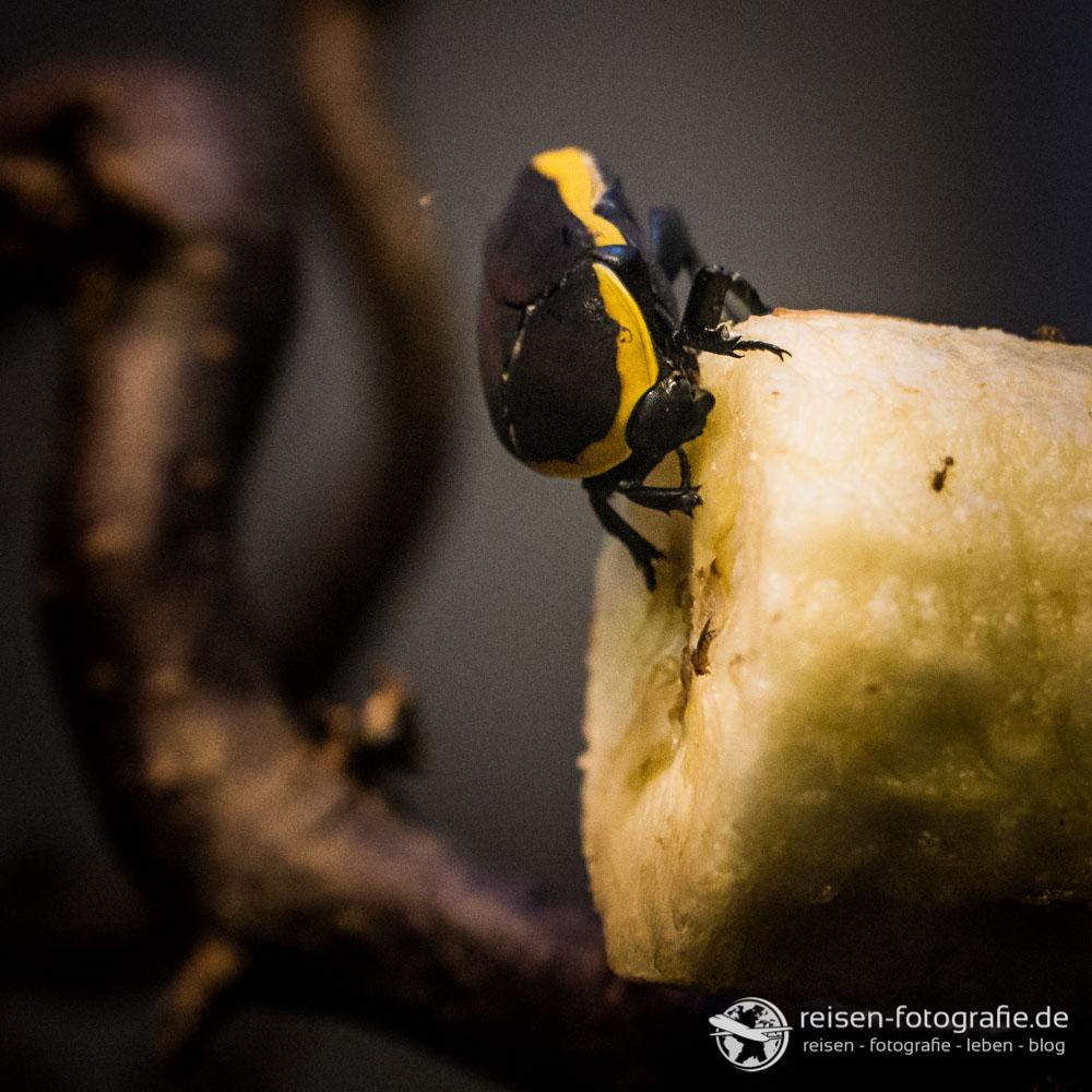 Insekten sind extrem anspruchsvoll