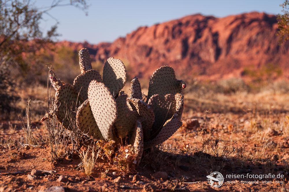 Wüste von Nevada