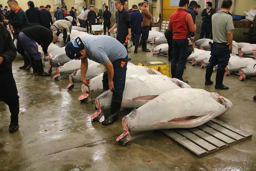 Thunfischmarkt