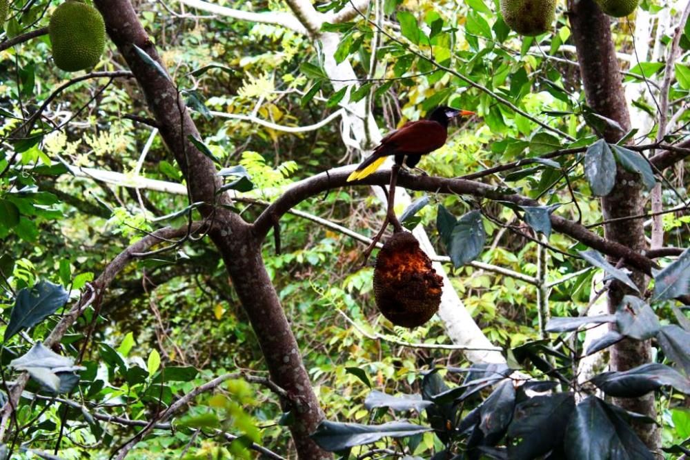 Vogel im Regenwald
