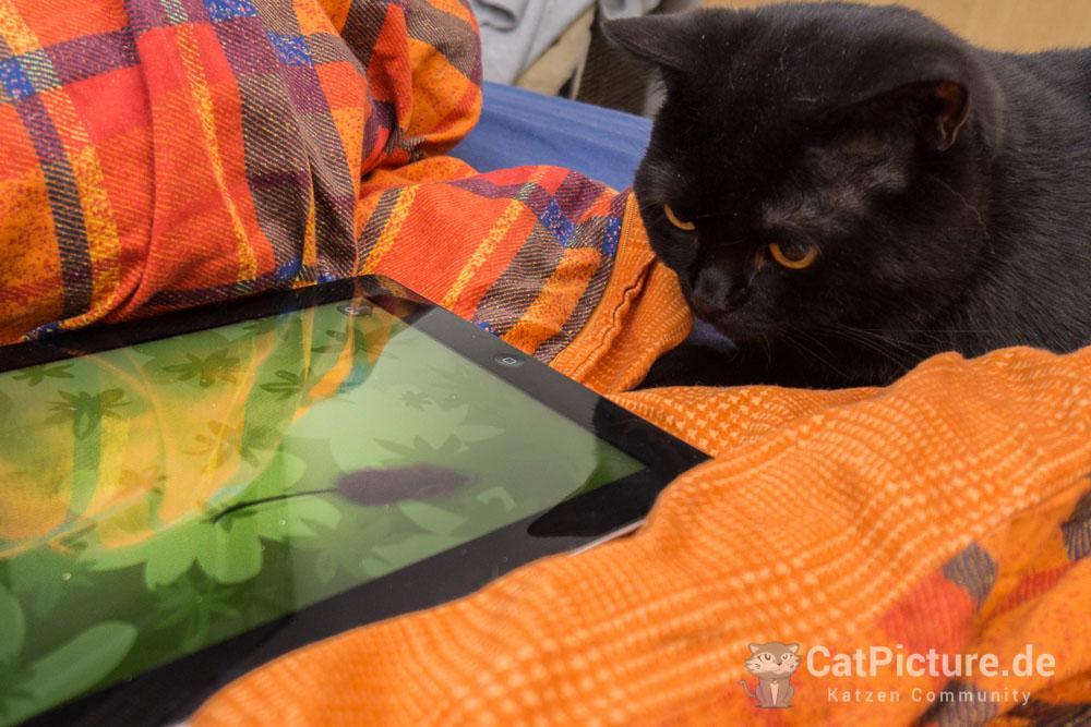 Jimmy und das iPad
