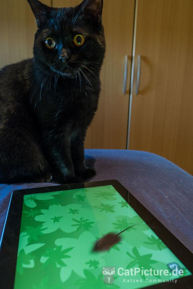 Wieso musste ich so lange Warten auf das iPad Spiel?