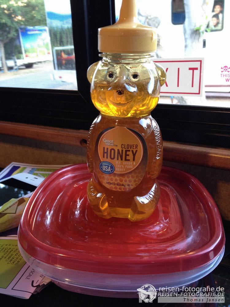 Unser Honigbär