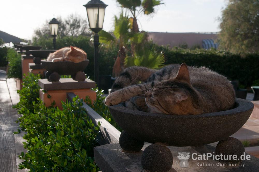 Katzen auf Malta - in Schalen