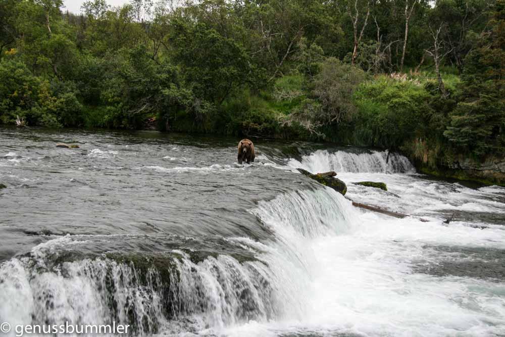Alaska Brooks Falls