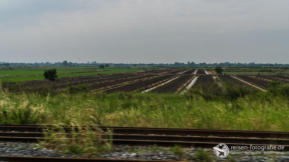 Reisfelder, so weit das Auge reicht