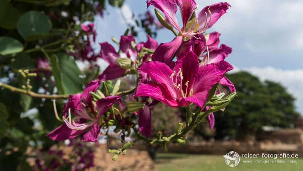 Blumen im Wat Mahathat