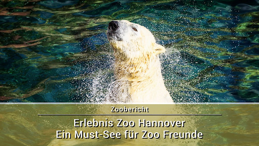 Zoo Hannover 2017