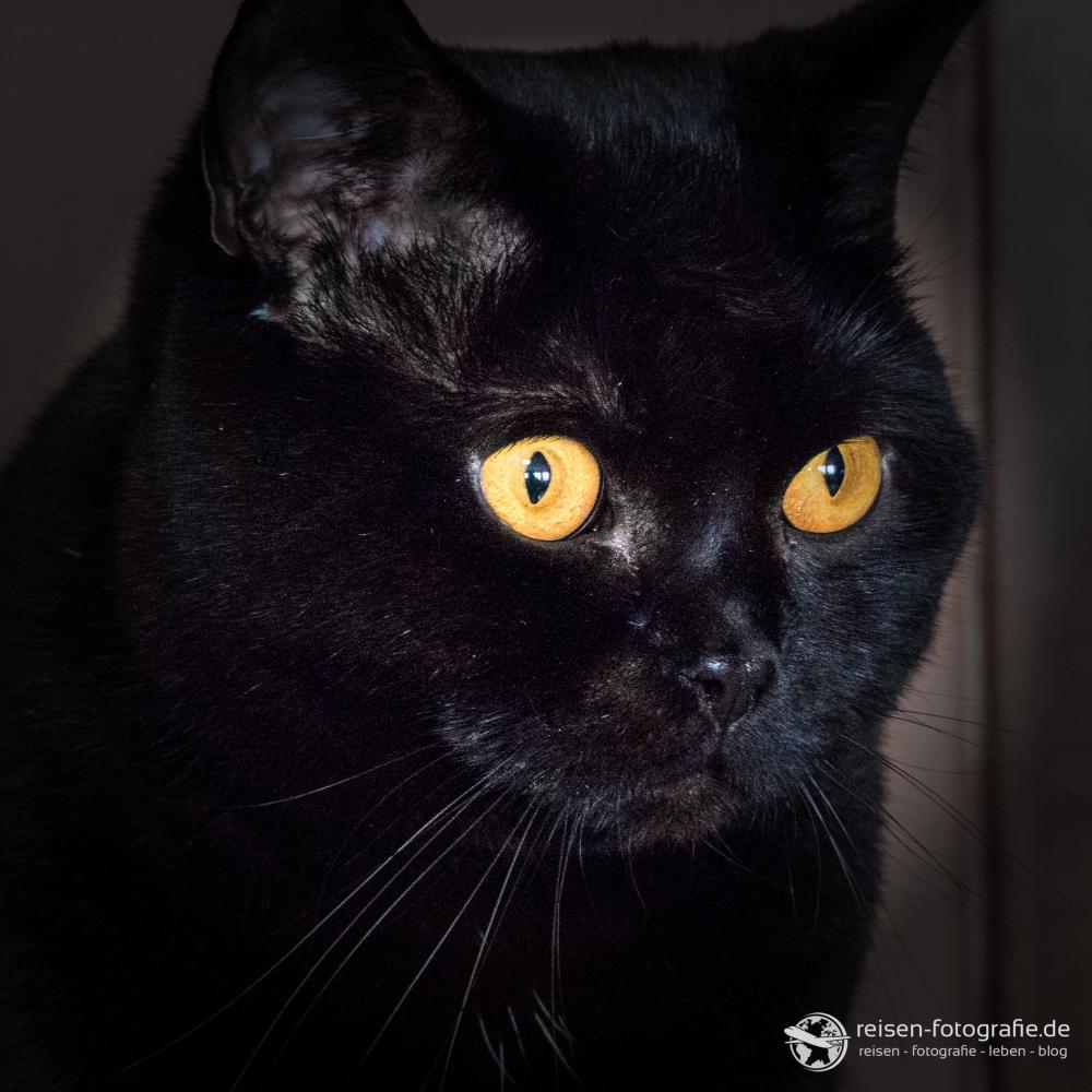 Achtung: Cat-Content