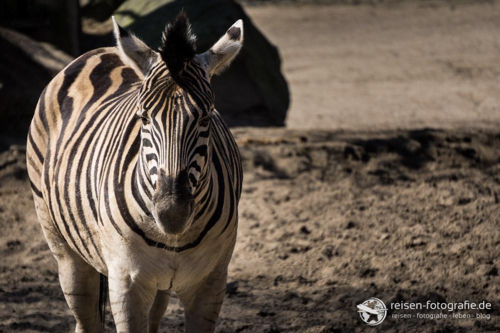 Melanie Alpha 6000: Zebra