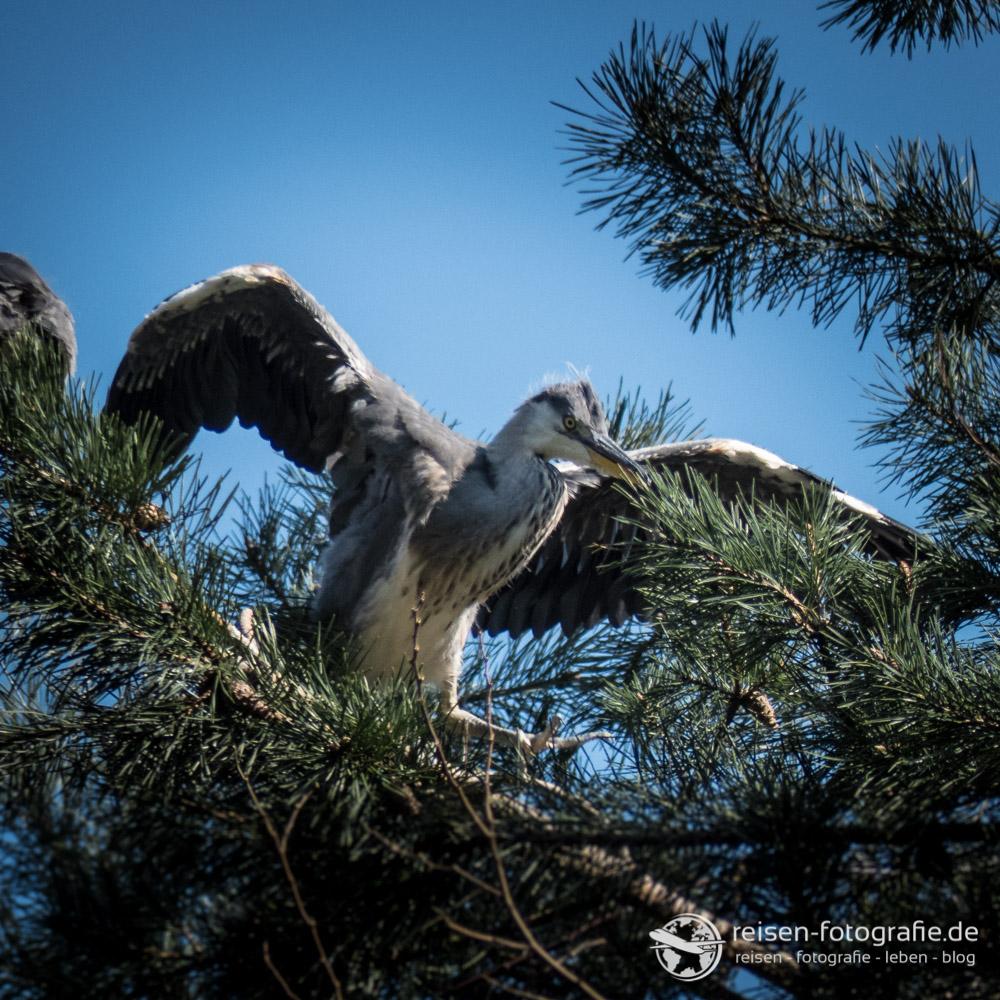 Thomas FZ300: Soll ich fliegen?
