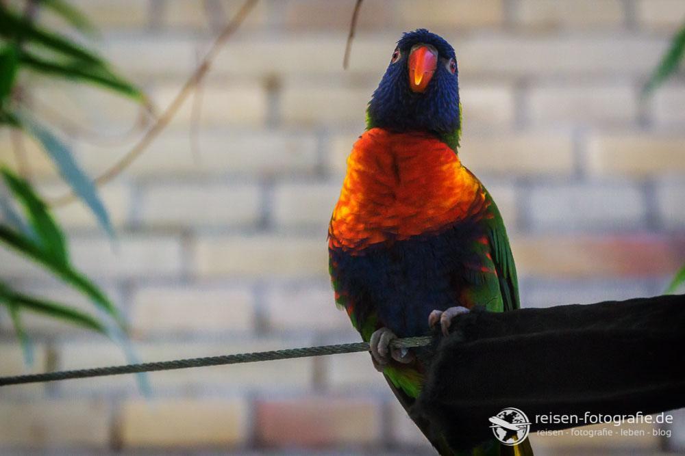 Papagei - der hat uns verfolgt aber nicht einmal in die Sonne gesetzt - klar, oder?