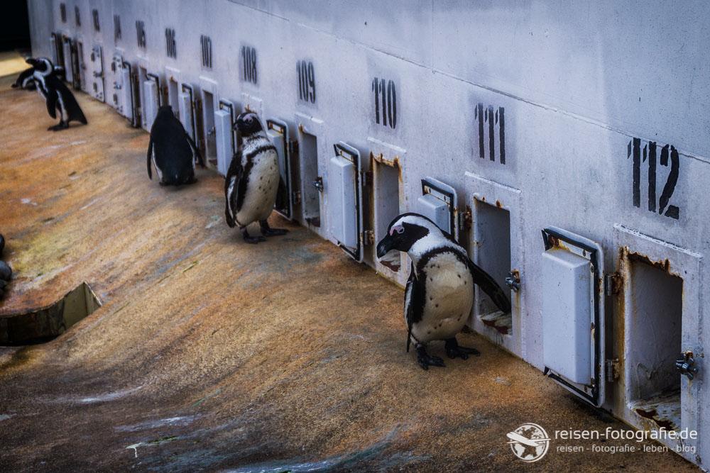 Pinguin Reihenhäuser
