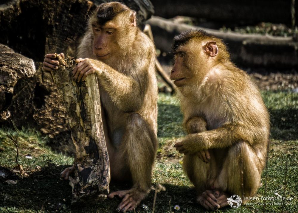Bildkritik zum Affenbild 1