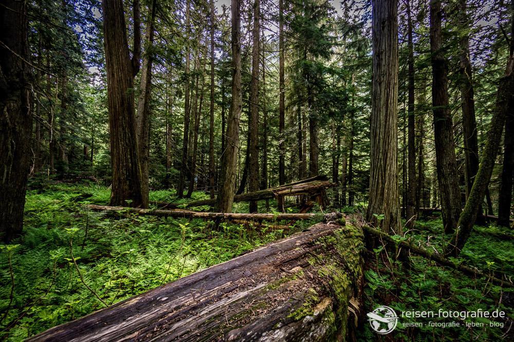 Regenwald im Revelstoke National Park