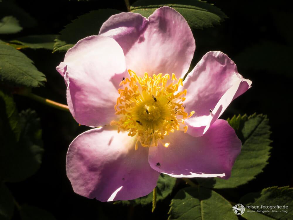 Lieblingsfoto 1/2016 - Kategorie Bunt - Einfach eine bunte Blume