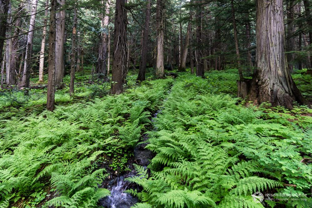 Flußquelle in den Rocky Mountains