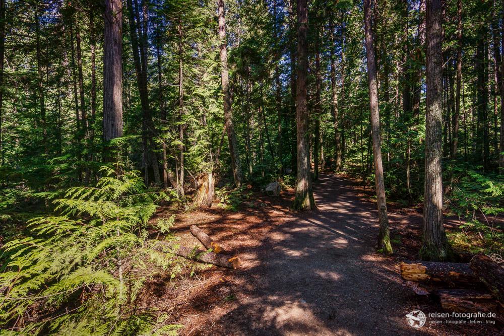 Fußweg zu den Spahat Falls durch den Wald