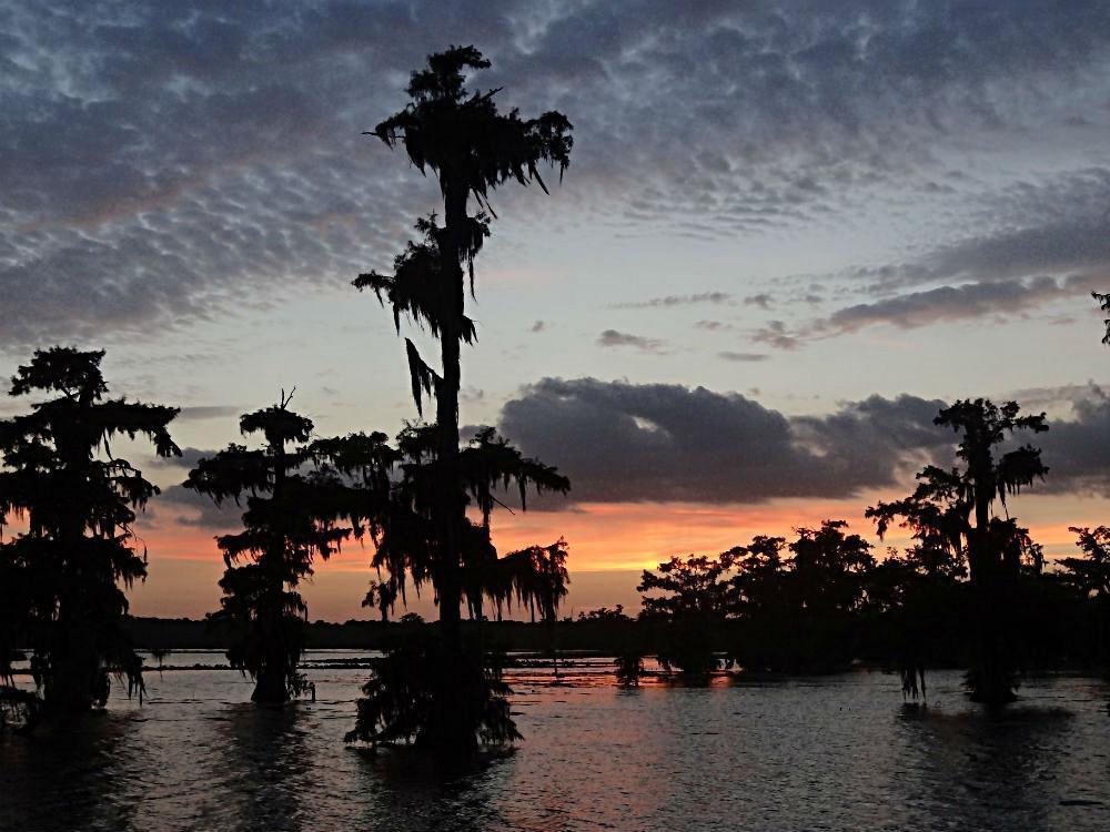 ie Zypressensümpfe sind das Wahrzeichen Louisianas, die vor allem zum Sonnenuntergang mystisch sind.