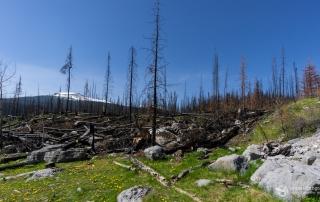 Resultat eines Waldbrandes 2015