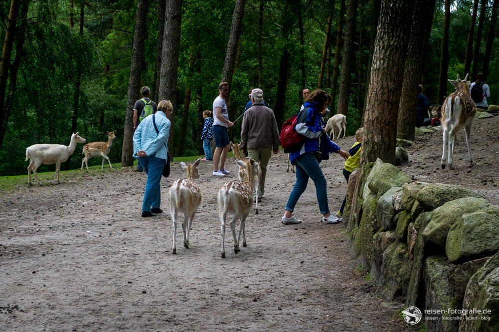 Wandern inmitten von Tieren