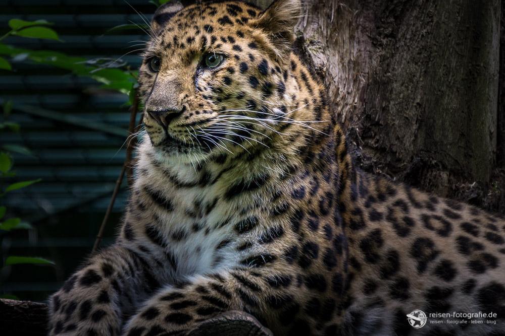 Weil es so ein schönes Tier ist, noch ein Bild